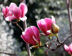 California #Travel: Visiting The Huntington Botanical Gardens in Pasadena - Photo Essay — via #SoulTravelers3