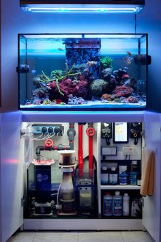 Saltwater Aquarium Setup, Saltwater Fish Tanks, Aquarium Stand, Aquarium Design, Marine Aquarium, Reef Aquarium, Reef Aquascaping, Fish Gallery, Freshwater Aquarium Plants