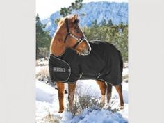 Kensington Adjustable Yearling/Pony Turnout Blanket