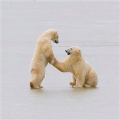 Beary cute! :^)