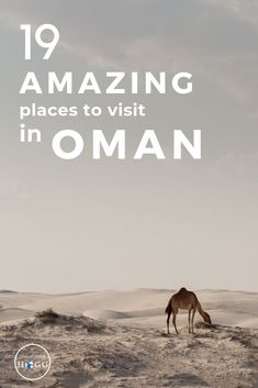 From waterfalls to wadis, deserted beaches to dunes, here are 19 amazing places to visit in Oman. Chosen after 6 weeks exploring the country, we include deservedly popular places like Wadi Shab, Nizwa Fort Oman Travel, Asia Travel, Travel Tips, Travel Guides, Travel Advisor, Travel Checklist, Travel Info, Wanderlust Travel, Thailand Travel