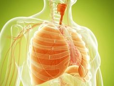 Natural Remedies to Strengthen the Lungs - Step to Health Clear Lungs, Essential Oils For Headaches, Nutrition, Lung Cancer, Eating Organic, Lunges, Natural Remedies, Smoothie, Health Tips