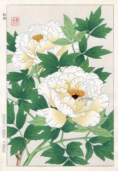 Пион из Сёдо Kawarazaki весенний цветок японской гравюры
