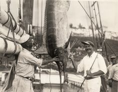 Ernest Hemingway (1899-1961) admires a catch aboard the Pilar, 1934. His understanding of the game fishes of the Atlantic, communicated through the Academy, made significant contributions to the field of ichthyology. via The Best History Books of 2012   Brain Pickings