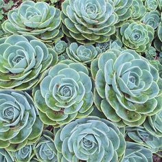 Whoever says there's no such thing as perfect has never seen a succulent. #perfection