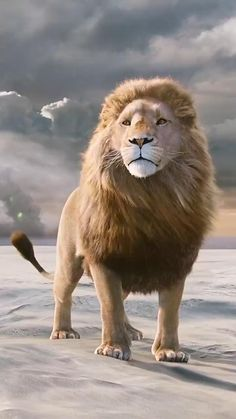 Lion Live Wallpaper, Animal Wallpaper, Lion Images, Lion Pictures, Majestic Animals, Animals Beautiful, Beautiful Lion, Beautiful Fantasy Art, Dark Fantasy Art
