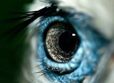 Wall of photographs w/ various animal eyes. Bird's eye.