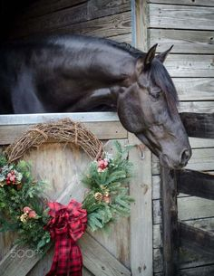 *The Barn is ready for Christmas..