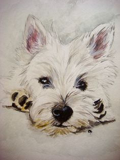 Westie Westhighland White Terrier Watercolor by PaintedbyCarol