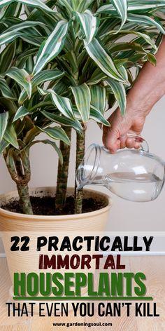 Container Gardening, Gardening Tips, Indoor Gardening, Urban Gardening, Hydroponic Gardening, Urban Farming, Garden Plants, Indoor Plants, Indoor Herbs