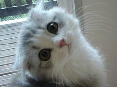 oxoxoxo::  :: The Cute And Cuddly Raffle ~ CC Raffle ...