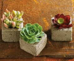 little cube succulent garden...  $79 for 3 cubes is outrageous, though.  The cost of making these can't be more than a few cents a piece.