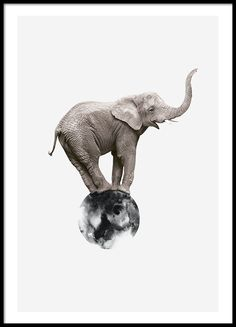 Poster with photo of elephant