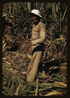 Delano, Jack,, photographer.  FSA borrower and participant in the sugar cane cooperative, Rio Piedras, Puerto Rico  1941 Dec.   1 slide : color.  Notes:  Title from FSA or OWI agency caption. Transfer from U.S. Office of War Information, 1944.  Subjects:  Farmers Sugar plantations Cooperatives Farm relief United States--Puerto Rico--Rio Piedras   Format:  Slides--Color  Rights Info:  No known restrictions on publication.  Repository:  Library of Congress, Prints and Photographs Division…