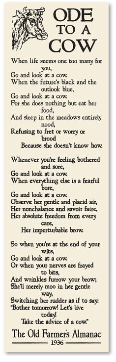 Ode to a Cow. Ode to beef and dairy cattle and the hardworking farms that own them. Love this, one of my new life mottos. Phrase Cute, Farm Humor, Funny Humor, Dairy Cattle, Show Cattle, Farm Signs, Thing 1, Down On The Farm, The Ranch