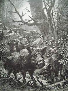 Giclee Print: Boars Art Print by Specht : Wild Boar Hunting, Hog Hunting, Hunting Art, Wildlife Paintings, Wildlife Art, Hog Pig, Animal Totems, Woodland Creatures, Wood Engraving