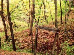 The sacred grove.