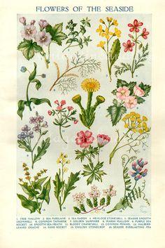 FLOWERS OF THE SEASIDE