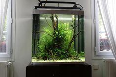 Besoin d'aide et de conseils pour un aquarium octogonal
