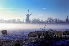 Buren gehuld in een witte deken - StadTiel.nl