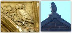 Yale Coruja Arquitetura 5
