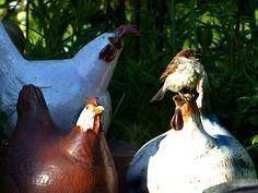 Die Hühner haben Besuch Garden Sculpture, Outdoor Decor, Plants, Nice Asses