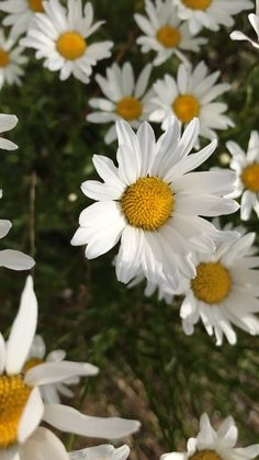 Not the daisy, not the flag; mind is moving. Aesthetic Photography Nature, Nature Photography Flowers, Nature Aesthetic, Flower Aesthetic, Night Photography, Landscape Photography, Photography Ideas, Beautiful Photos Of Nature, Beautiful Flowers Wallpapers