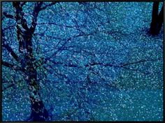 Autumn Tree in Blue, Green, and Purple Framed Canvas Print by Robert Cattan at AllPosters.com