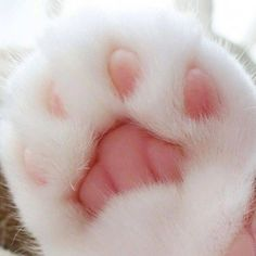 Cute Kittens On Video. Cute White Fluffy Kittens Pictures both Cute Animals Endangered Cute Cats And Kittens, Kittens Cutest, Fluffy Kittens, Cat Paws, Dog Cat, Cute Baby Animals, Funny Animals, Photo Chat, Cat Aesthetic