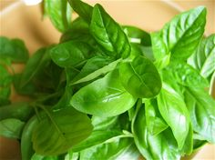 BASIL -- A popular additive in cuisines from around the world, basil enjoys praise for its defenses against low blood sugar and antioxidant properties  almost as much as it does for the rich flavor.