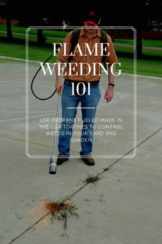 """Flame weeding is what we like to call a """"slow kill"""".  Essentially, you are destroying cell structure in the plant leaf. The weed will no longer put energy toward growth (photosynthesis) taking the kill though the root system. YES, flame weeding will kill the roots too! Even on big weeds (over 6""""), you will see a stunting effect and even a kill within a few days, depending on how established the root system is and how long the plant was exposed to heat. Organic Gardening, Gardening Tips, Kill Weeds Naturally, Killing Weeds, Organic Weed Control, Weed Killers, Cell Structure, Creative Landscape, Root System"""