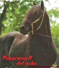 CABALLOS COLOMBIANOS: CABALLOS HISTORICOS DEL PASO FINO COLOMBIANO Horses, Animals, Animales, Animaux, Animal, Animais, Horse