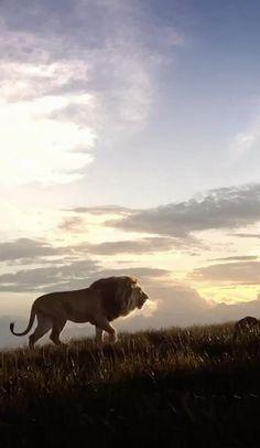 Beautiful Scenery Pictures, Beautiful Nature Scenes, Cute Wild Animals, Cute Kawaii Animals, Aesthetic Movies, Sky Aesthetic, Beautiful Creatures, Animals Beautiful, Lion King Video