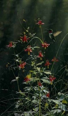 """Terry Isaac Limited Edition Print:""""Grace Notes - Ruby-Throated Hummingbird"""""""