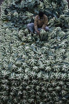 Pakistan, Lahore, green market - the man is selling cauliflowers