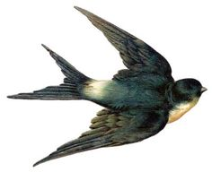 Vintage Clip Art - Bird - Swallow
