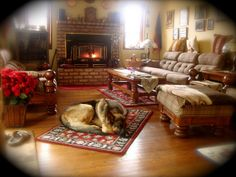 german sheperds sleeping by the warm fireplace | Recent Photos The Commons Getty Collection Galleries World Map App ..