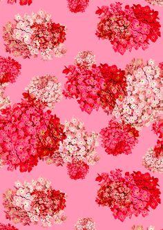 Hydrangea (doubled) pattern by Laura Redburn