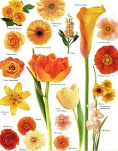 Flower names by color pinterest flower collection and flowers wedding flowers by color orange courtesy martha stewart weddings planner mightylinksfo