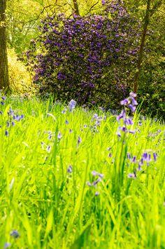 Westonbirt Arboretum - Gloucestershire, England