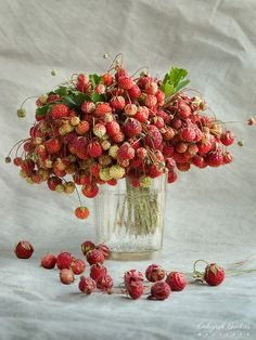 wild strawberry bouquet - very fun for summer Fruit And Veg, Fruits And Veggies, Fresh Fruit, Vegetables, Acerola, Vida Natural, Strawberry Fields Forever, Wild Strawberries, Strawberries Garden