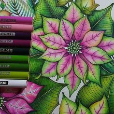 These are the colours that I used in the pink and green poinsettia. With very light hand, I layered down the pink and green colour (picture 2) and I kept layering the colours until it is saturated. And then I used the white coloured pencils to blend everything together. Sometimes the colours will get wash off or less intense after the white coloured pencils, I will then intensify the colour by adding the green and pink again. Hope this helps guys. . . #prismacolorpremier #johannaschristm...