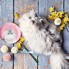 Put a tiara on @suburbancrunchygirl's cat, and it would be hard to tell these two apart! You can see all four party animals on the Party Cats Salad Plate Set via the Like2b.uy/Pier1 link in our profile. #pier1love #twinsies #catsofinstagram
