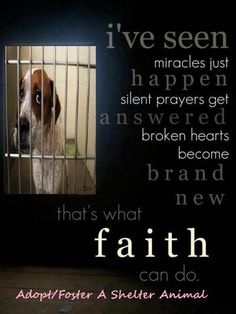 i've seen miracles just happen... silent prayers get answered... broken hearts become brand new...  that's what faith can do!  ADOPT FOSTER A SHELTER ANIMAL
