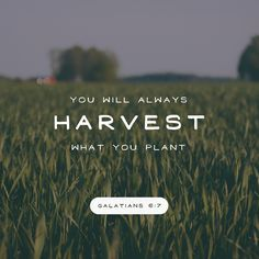 Galatians - Harvest what you plant Bible verses Scripture Verses, Bible Verses Quotes, Bible Scriptures, Faith Quotes, Galatians 6 7, Deeper Life, Verse Of The Day, Christen, God Jesus