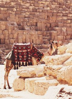 Helpful travel advice for Egypt  {take me away № 44 | the pyramids of giza, egypt} by {this is glamorous}, via Flickr
