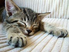 Veränderungen sind für Katzen Stress - http://www.transportbox-katzen.de/veraenderungen-sind-fuer-katzen-stress/