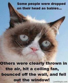 some people funny quotes quote cat lol funny quote funny quotes humor