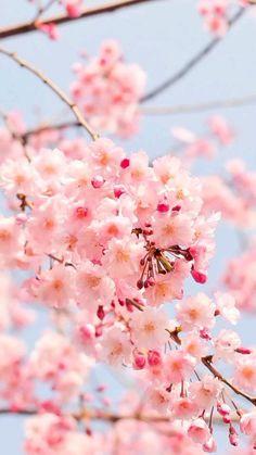 Pink Wallpaper Quotes, Pink Wallpaper Backgrounds, Flower Phone Wallpaper, Iphone Wallpaper, Iphone Backgrounds, Wallpapers, Beautiful Flowers Pictures, Flower Pictures, Flowers Nature