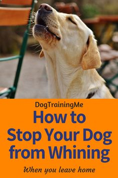 Training your dog is mostly about building your relationship with your dog and setting up boundaries. Be firm but consistent and you will notice extraordinary results in your dog training efforts. Dog Training Books, Dog Training Methods, Basic Dog Training, Dog Training Techniques, Training Your Puppy, Training Dogs, Dog Whining, Puppy Obedience Training, Positive Dog Training